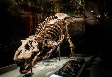 2.dinotijdt.rexmikebinkfotografie